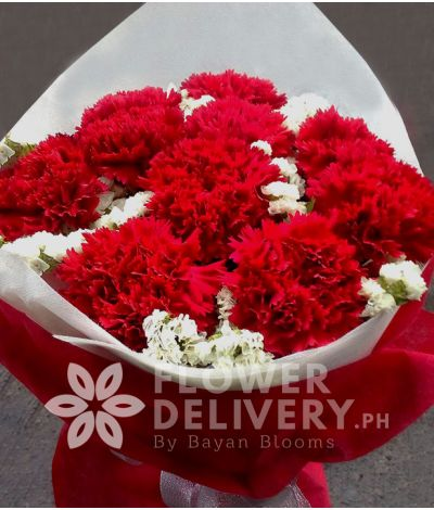 1 Dozen Red Carnations