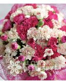 20 White and 20 Pink Carnations