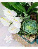 Charming Box of White Flowers