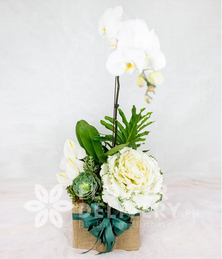 Charming Box of White Flowers