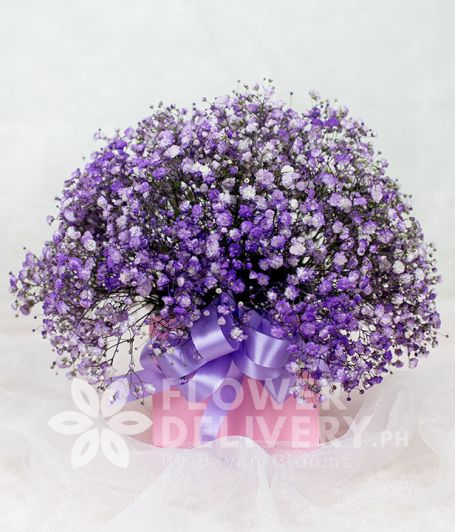 Pretty Pink Box of Purple Gypsophila