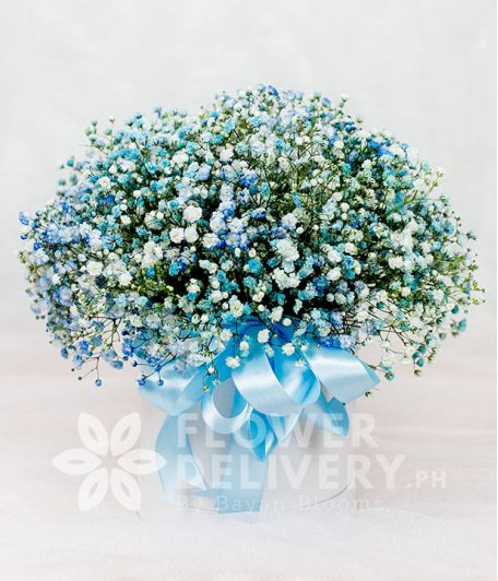 Pretty Box of Sky Blue Gypsophila